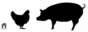 Chicken and Pig